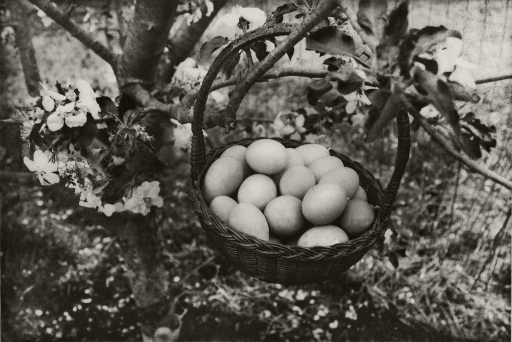 Garden and Eggs. Photogravure