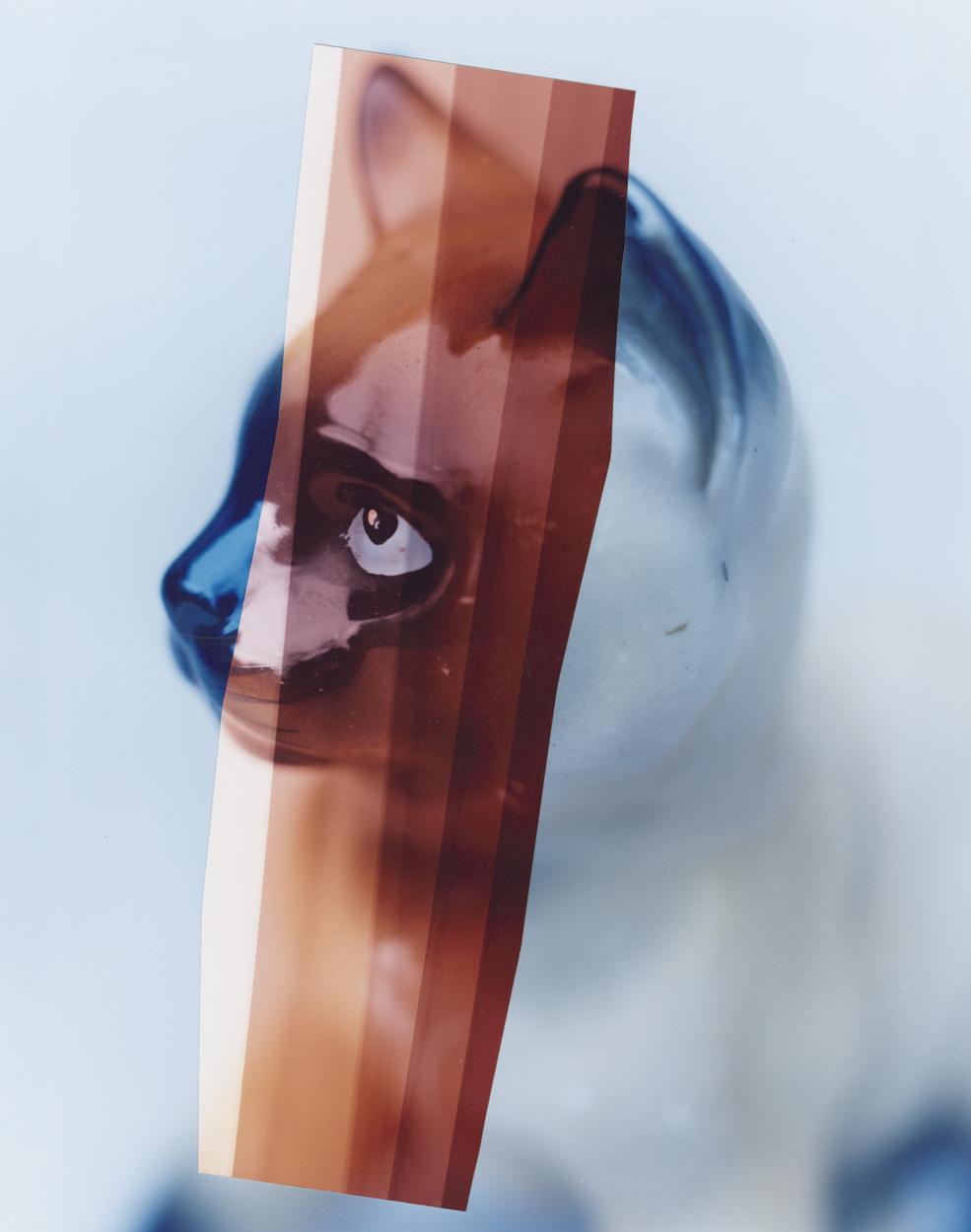 blue cat sinc.jpg