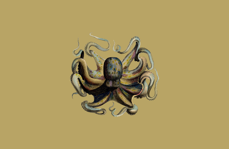 Octopus_BG.jpg