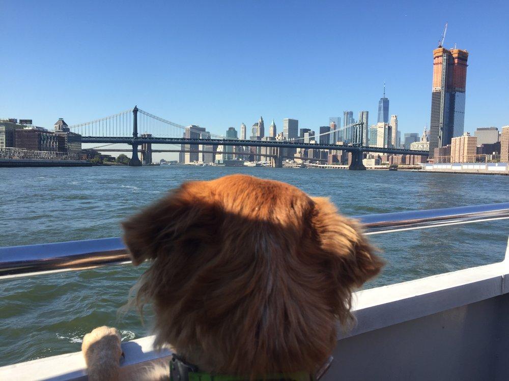 Jake's New York Adventures