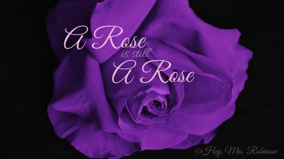 A Rose is .jpg
