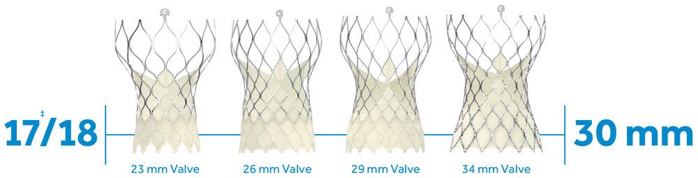 Heart Valves – Transcatheter