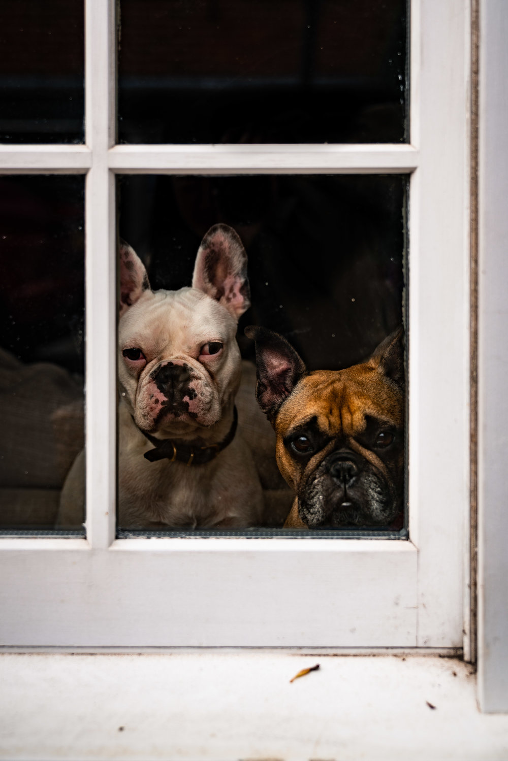 Frenchies, Eton