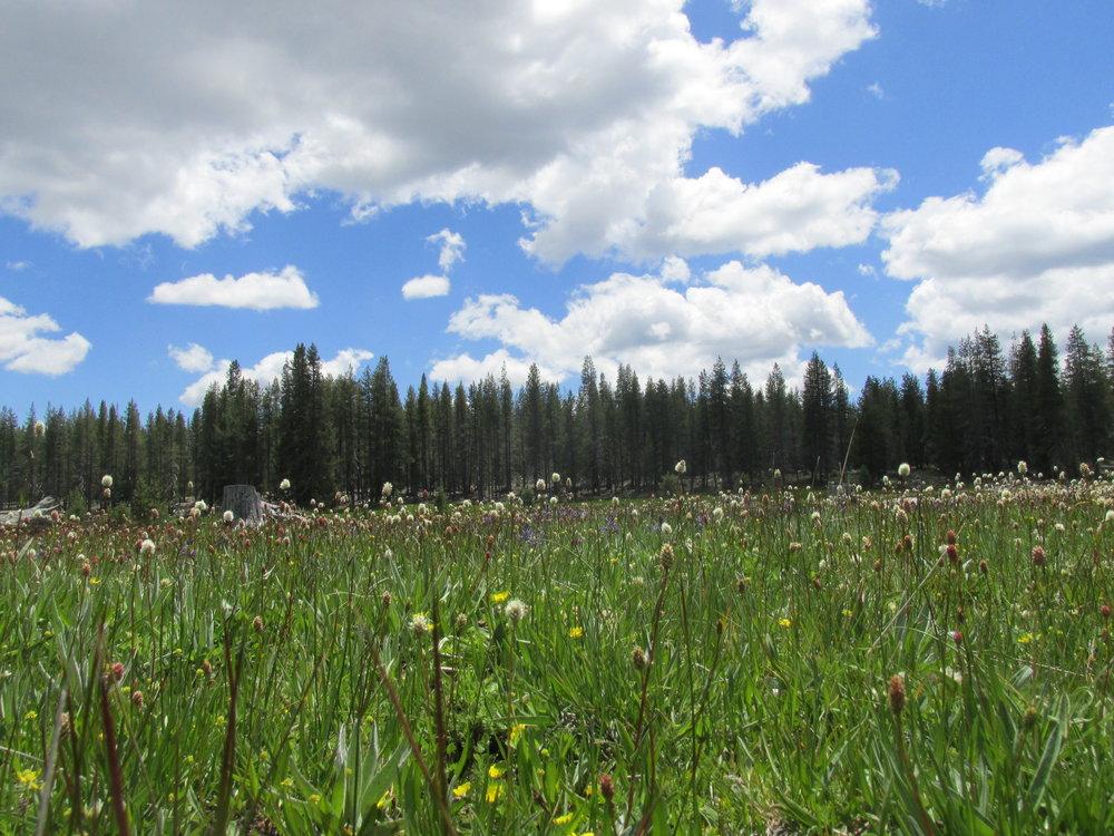 RosenbergCE_wildflowers2 (1).JPG