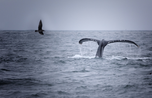 Whale watching is a popular activity on the Oregon Coast
