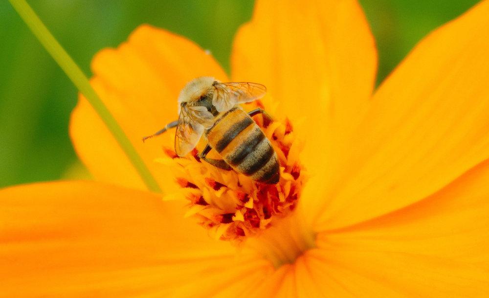 abeja-home.jpg