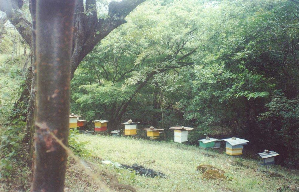 Primer apiario establecido por Miel Dorada ubicado en San Miguel de Turrucares.