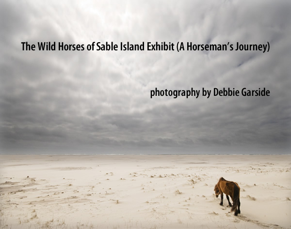 Debra Garside  - THE WILD HORSES OF SABLE ISLAND Oct 25 - Nov 25 2012