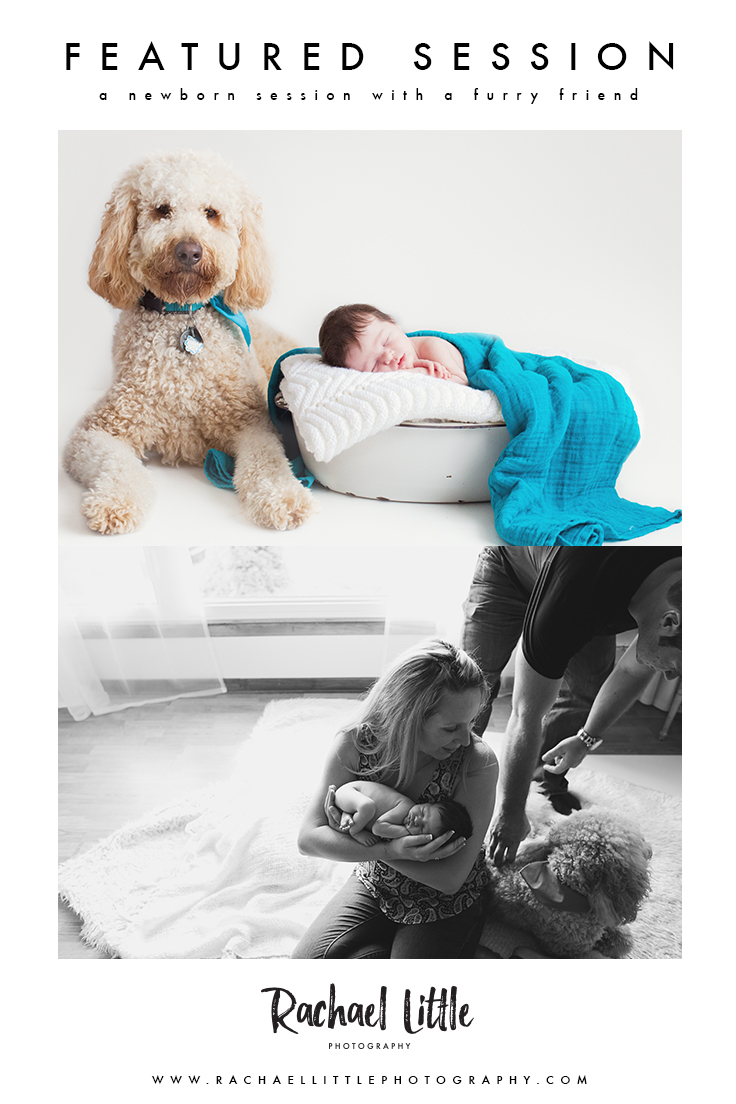 A very well behaved golden-doodle with his baby sister, during her newborn photography session in Woodstock, Ontario.
