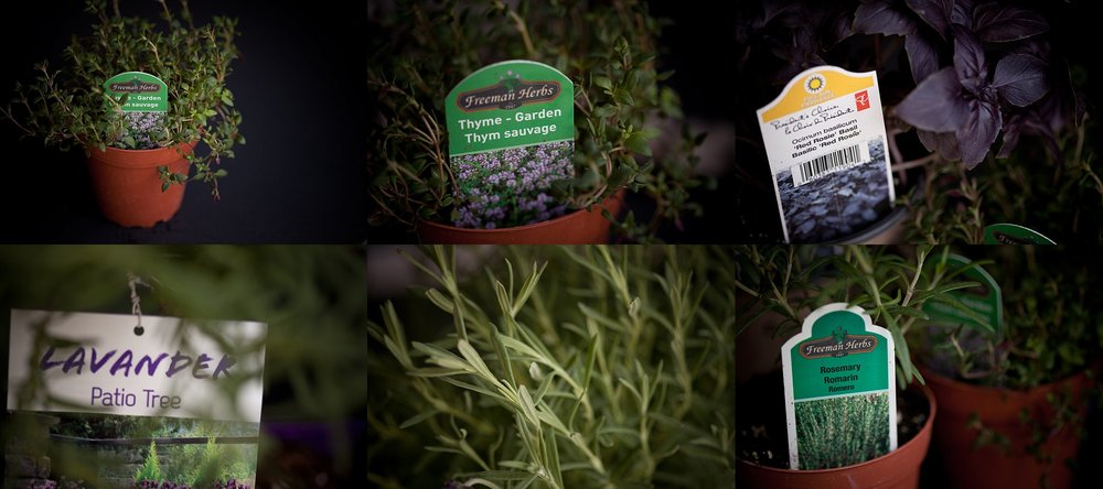 A selection of garden herbs for a kids planter garden project!