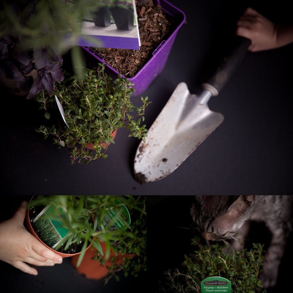 Everyone loves the fragrance of fresh herbs, including kitty cats!