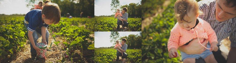 Strawberry picking in Innerkip Ontario.