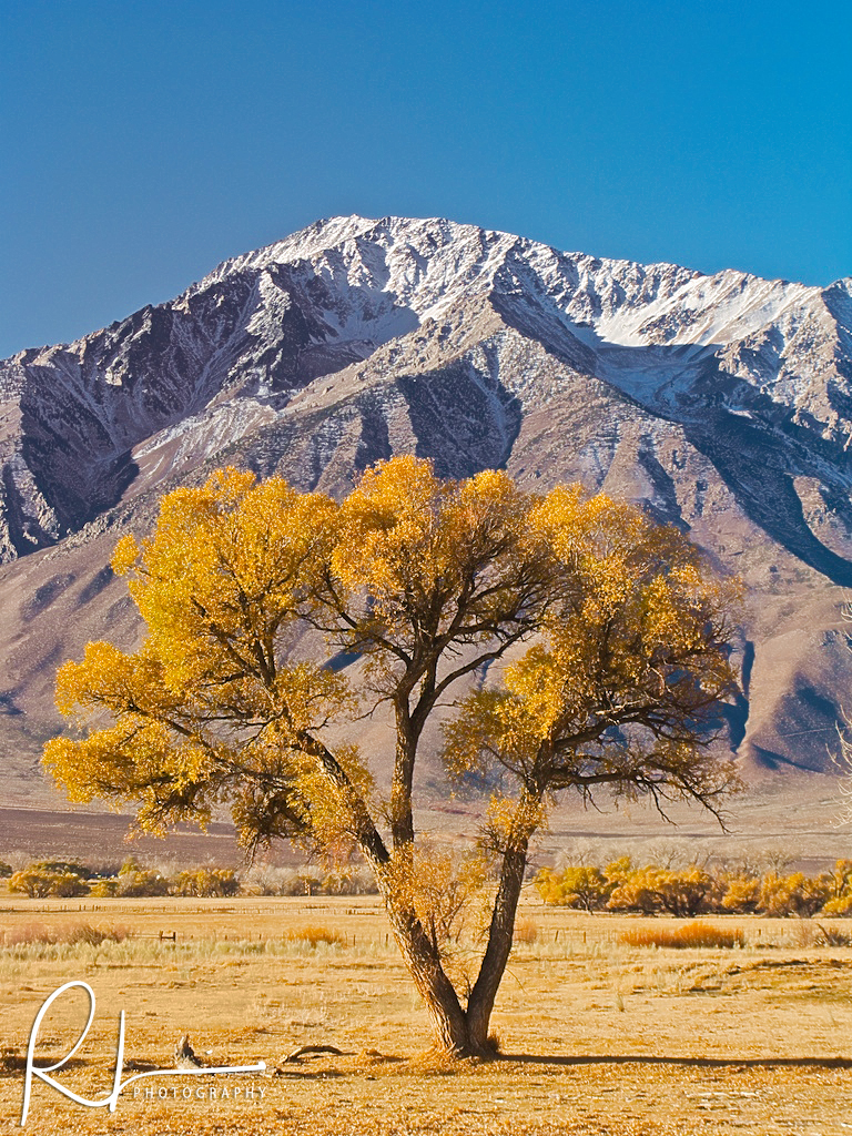 Tree and Mountain