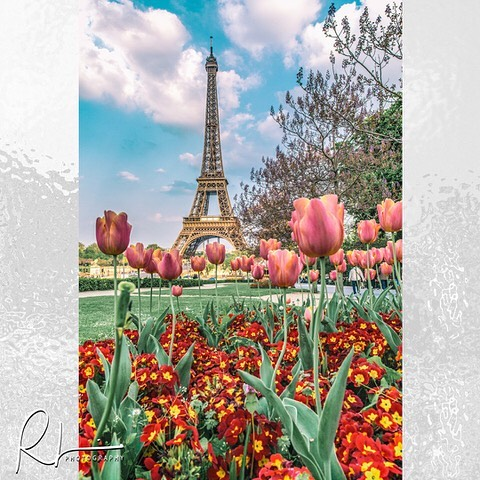 Gorgeous day in Paris! One of my favorite shots of the Eiffel Tower from my last trip. #eiffeltower #eiffeltulips #tulips #tulipseiffel #paris #parisfrance #photographerinparis #photographerinthepnw