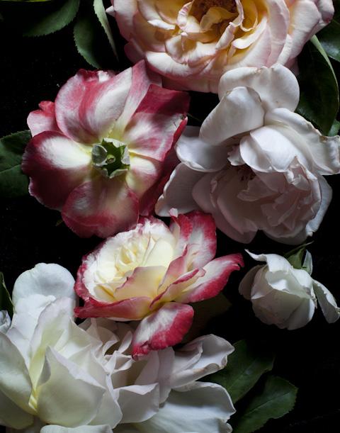 fleurs-0367.jpg