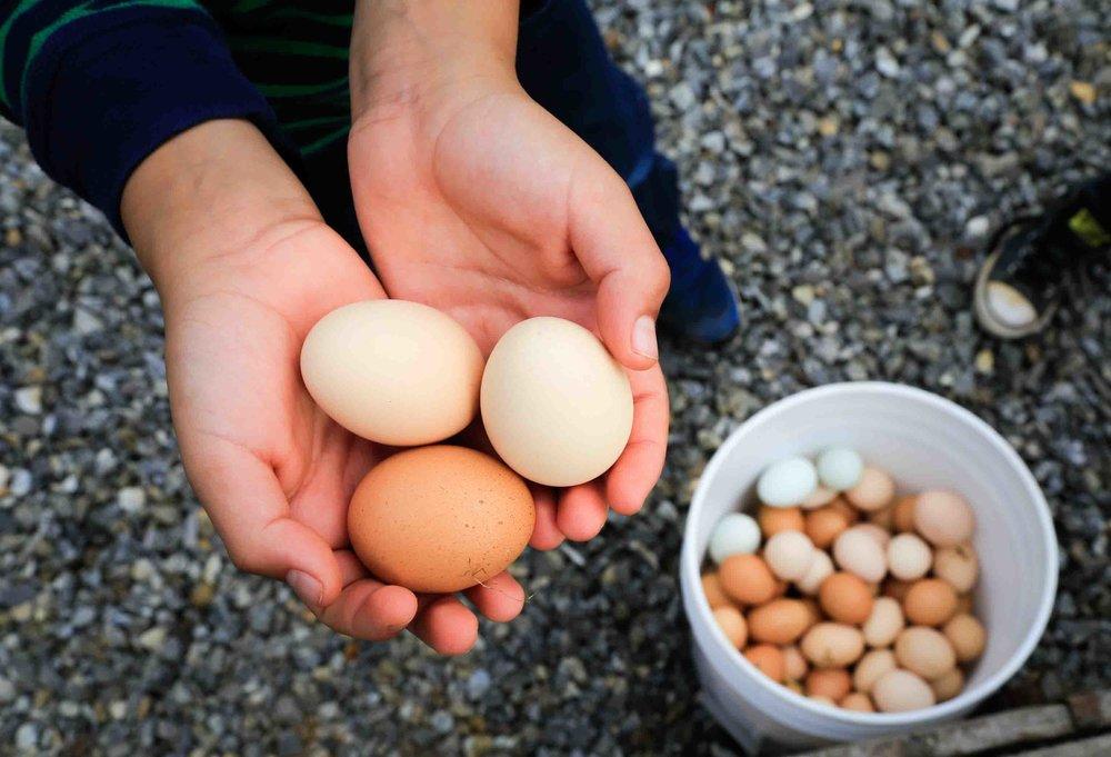 44_eggs.jpg