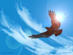 eagle-soaring.jpg