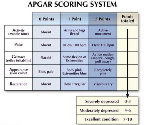 apgar_10616033.png