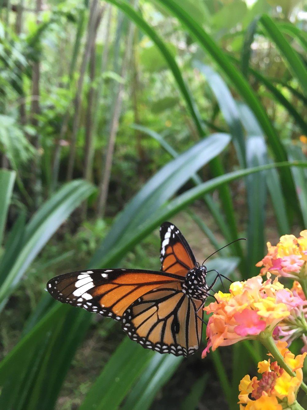 Butterfly Park | © Regina Beach