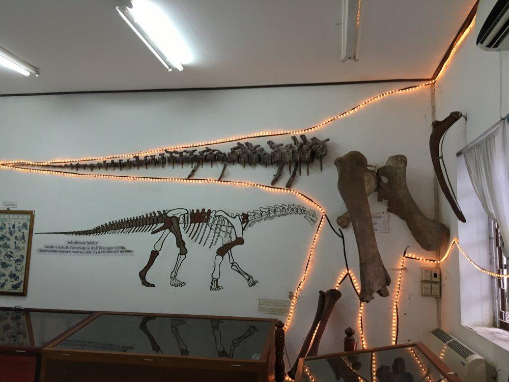 Savanakhet Dinosaur Museum |© Regina Beach