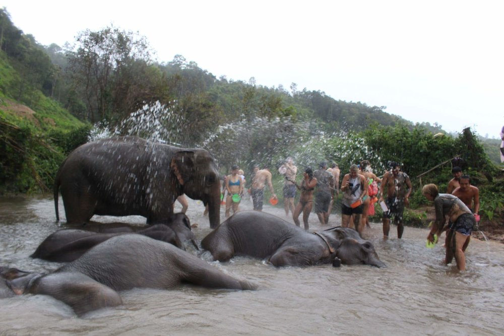 The elephants at the sanctuary in Chiang Mai