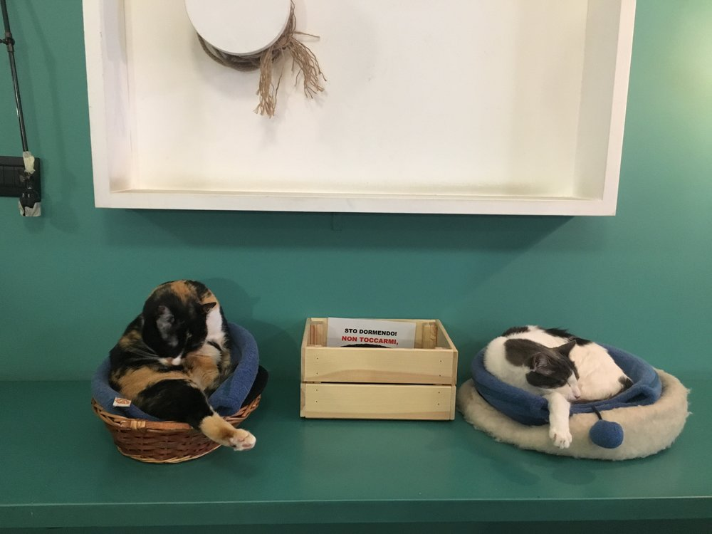 Two of the Crazy Cat Cafe's cats sleep in their beds.