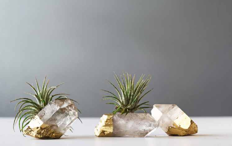 bridesmaid air plants