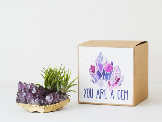 9 Gifts for the Sister You Can't Live Without - Air Plant by Air Friend