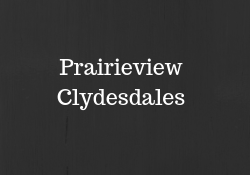 Prairieview Clydesdales.png