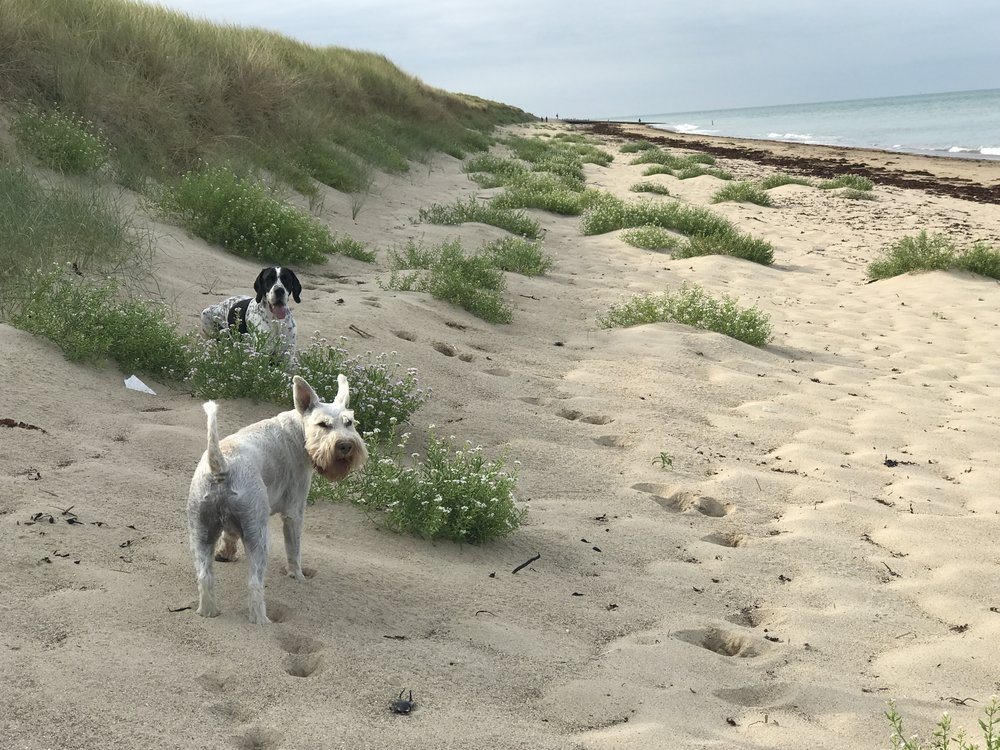 The boys love the sand dunes at Gouville.