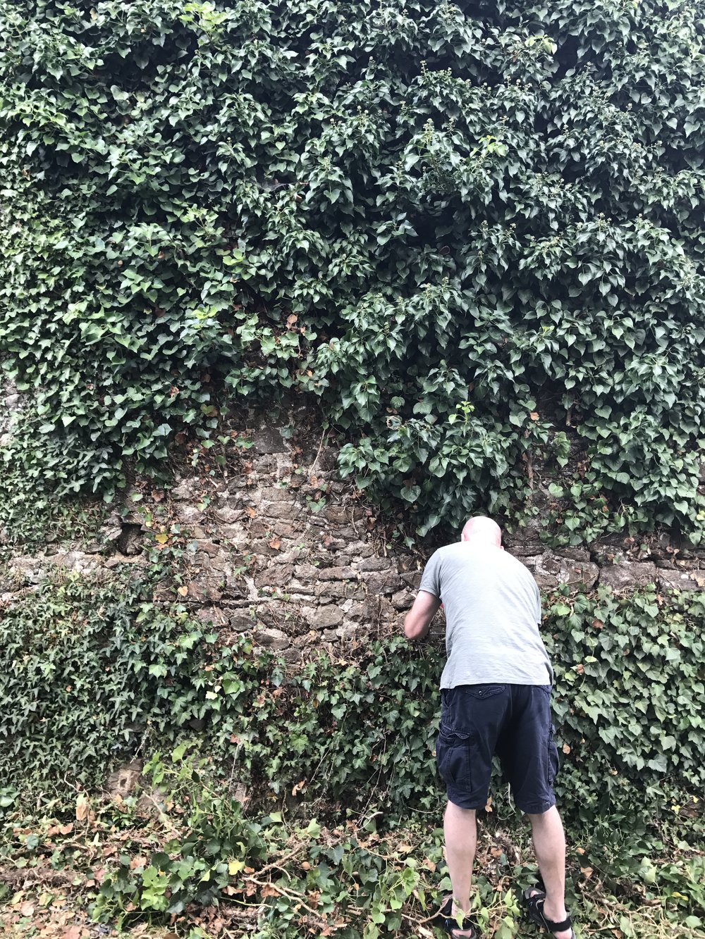 There's plenty of ivy to strip off the stone walls.