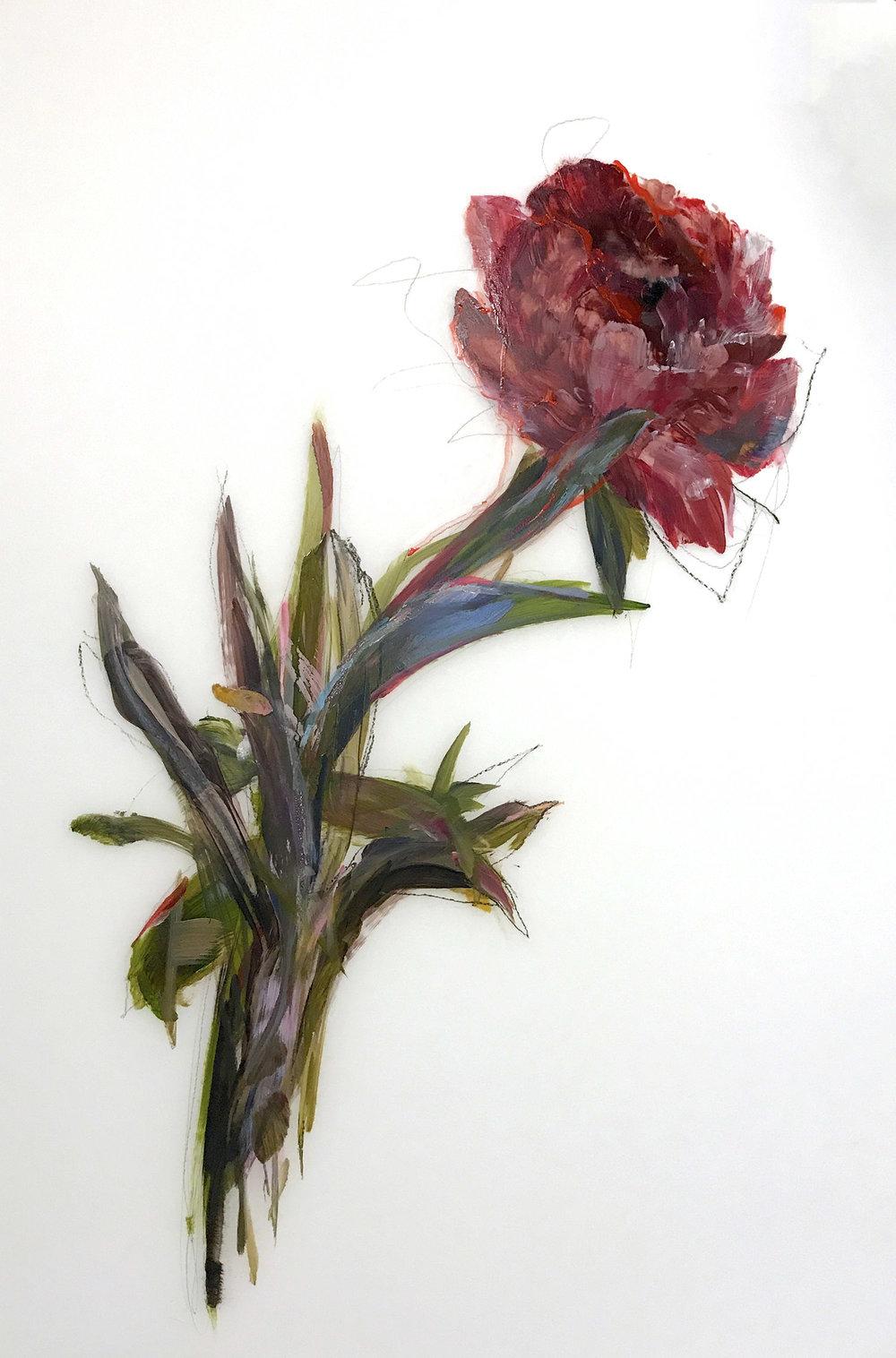 Madeleine Lamont, Dark Pink Bloom, oil on mylar, 35 x 24 in.
