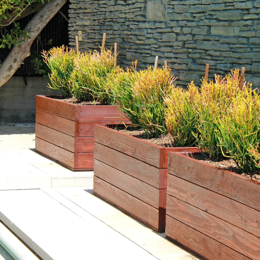 planter boxes_succulents_flores artscape aka flores landscaping.jpg