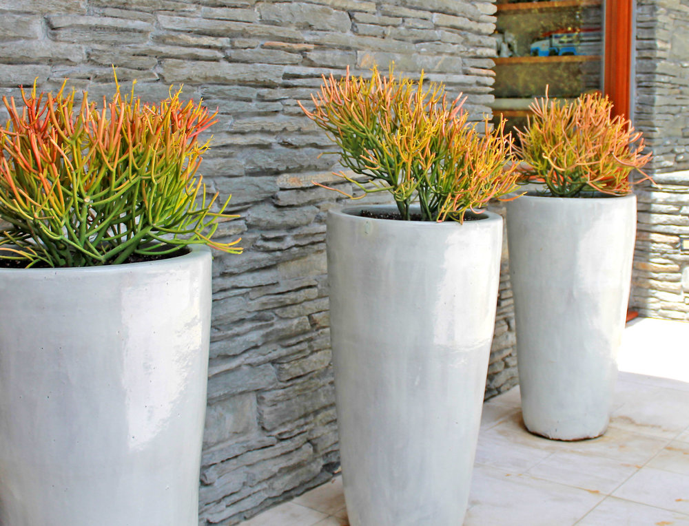 succulents in pots_flores artscape aka flores landscaping.jpg