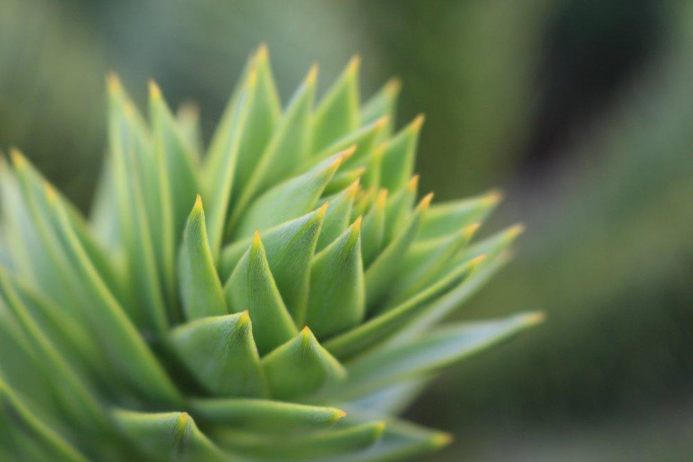 Succulent Plants -