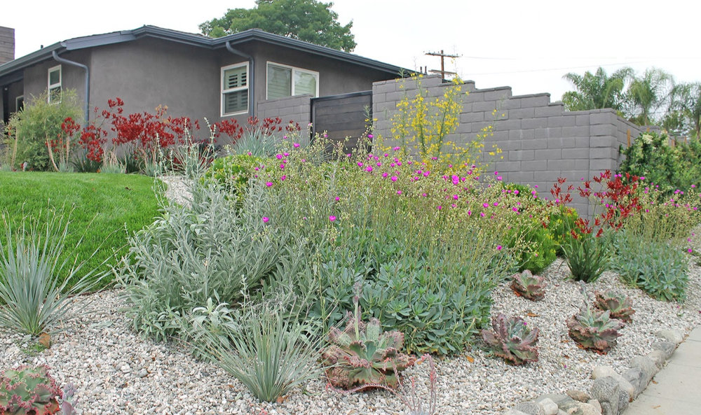 A wide variety of Drought-tolerant Plants including a Ficus Hedge in Gravel with Drip irrigation