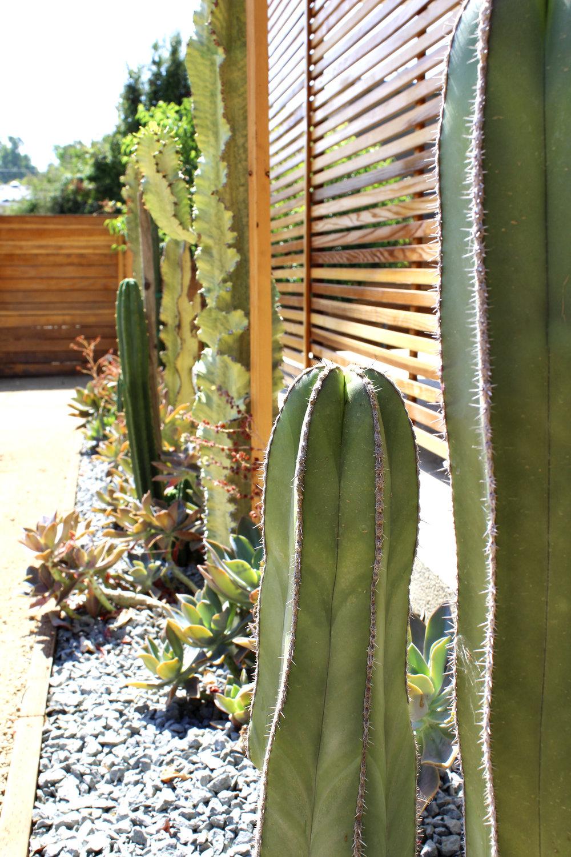 Cactus & Succulents in Gravel