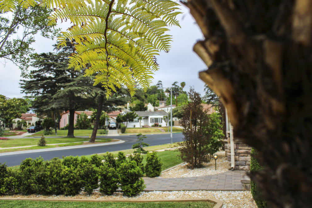 Front-yard Landscape with a New Lawn, Shrubs, Gravel and Outdoor LIghts