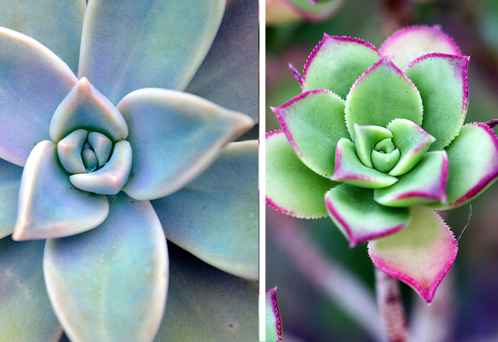 drought-tolerant-landscaping-succulents-in-los-angeles-flores-artscape.jpg