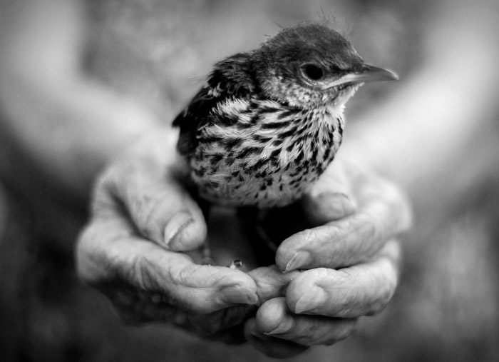 bird in hands.jpg