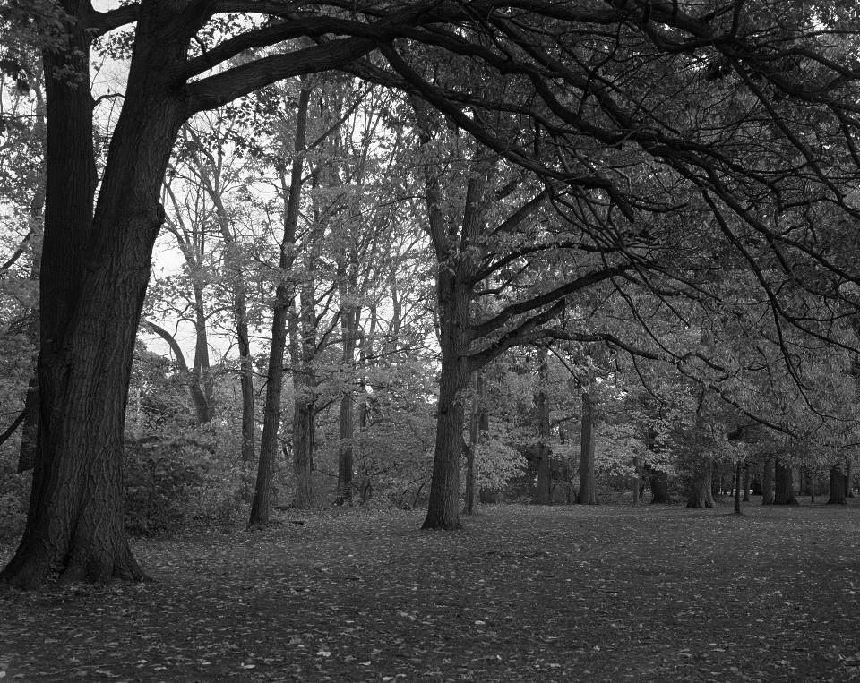 Seneca Park Autumn 2018