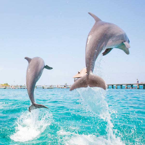 Dolphin_tours_destin.png
