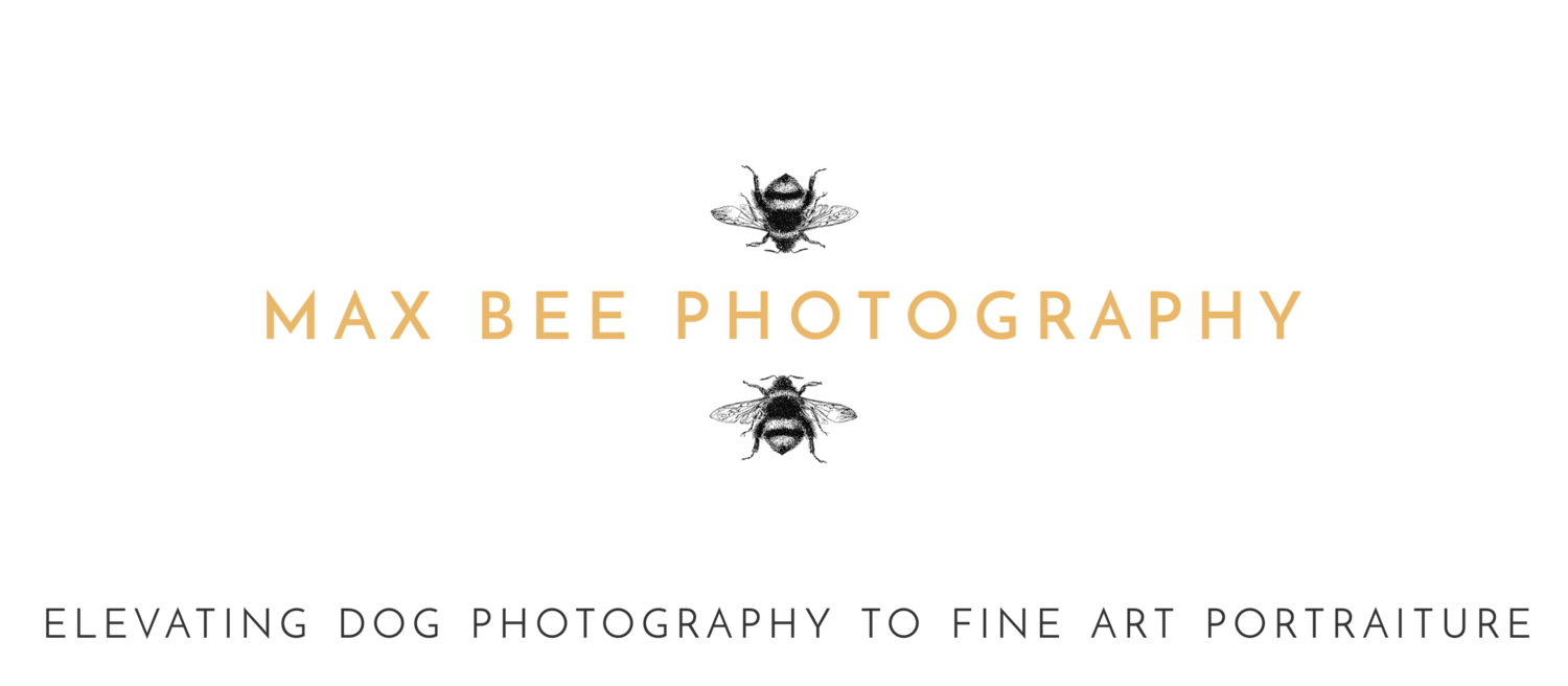 Max Bee Photography | Elevating Dog Photography to Fine Art Portraiture