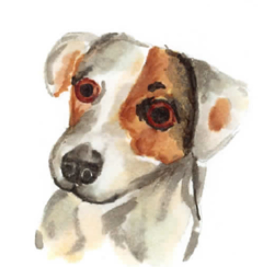 dogs8.jpg