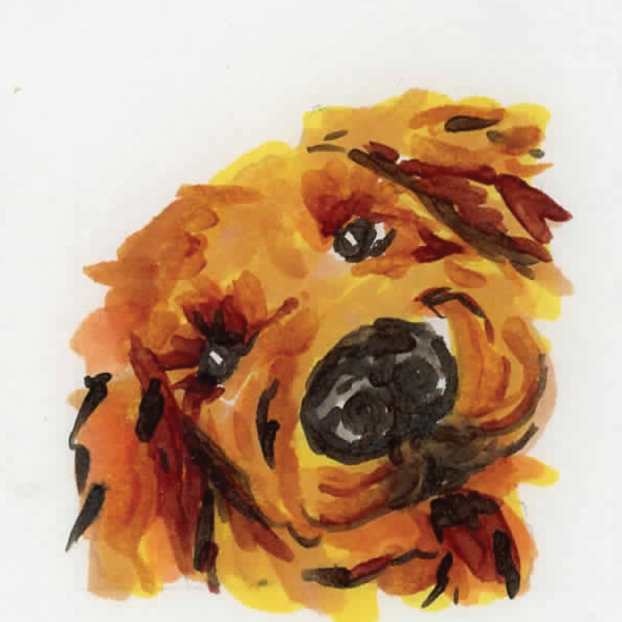 dogs13.jpg