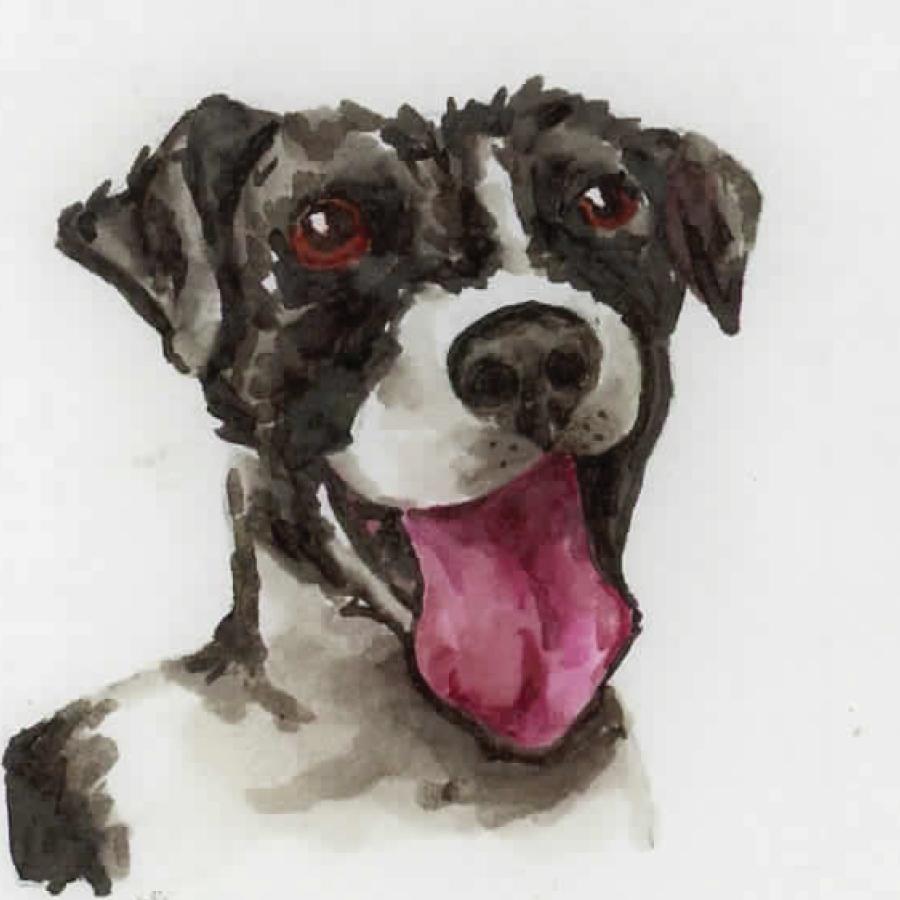 dogs15.jpg