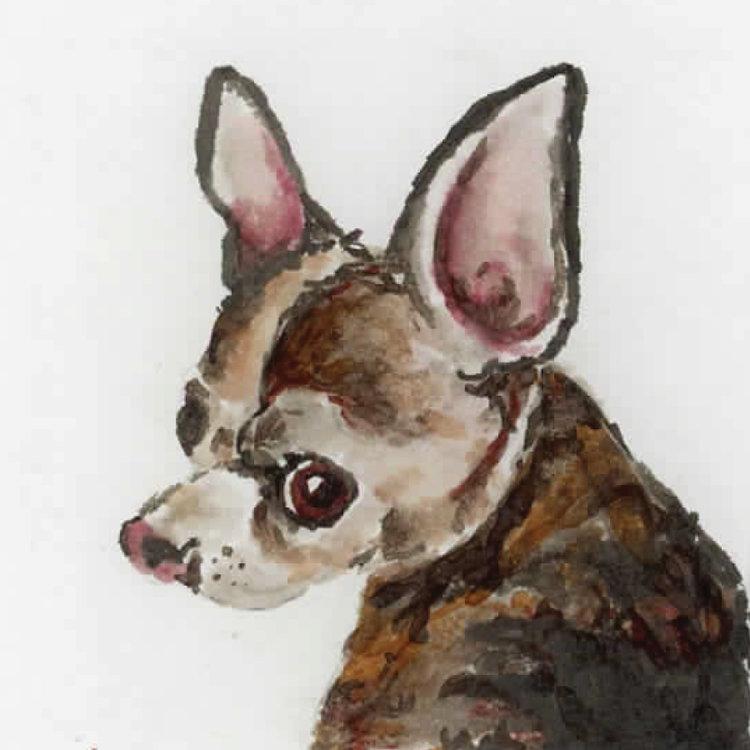 dogs16.jpg