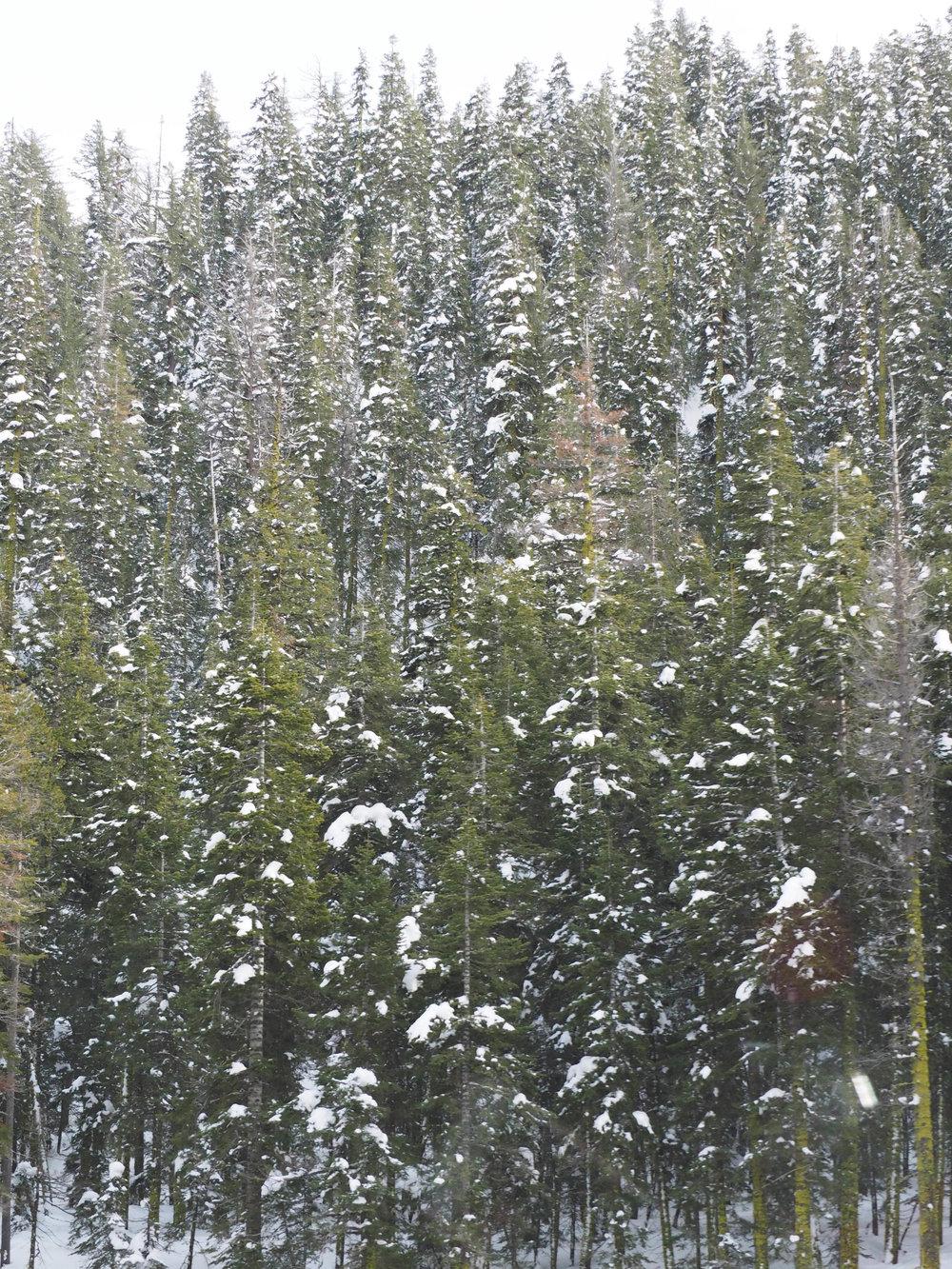 the_twoh_lake_tahoe-10.jpg