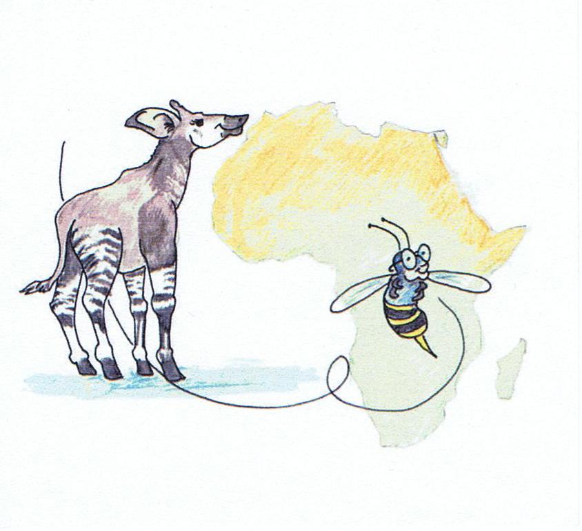 Okapi & Beezoo.   Illustration: John Brasaemle