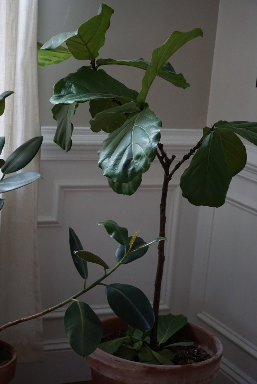 Add year round greenery with houseplants. Not only are they fun to look at, they help purify the air.  -